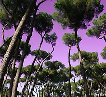 roma trees by jean-jacques bernard