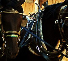 French Percheron Muster by Polly Peacock