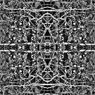 Branches on Trees Fractal Kaleidoscope by Pixie Copley LRPS