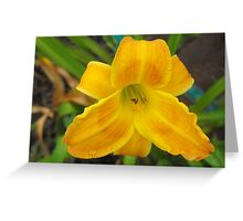 Dewy Eyed Day Lilly  Greeting Card