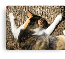 Have You Hugged A Tree, Today? Canvas Print