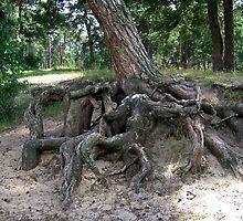 Roots by TarasKokovsky