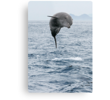 Jumping Dolphin II Metal Print