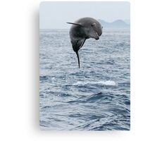 Jumping Dolphin II Canvas Print