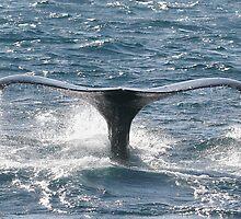 Whale Fluke by Steve Bulford
