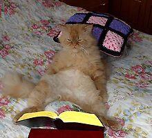 My cat by TarasKokovsky