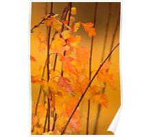 Elderberry Leaves Poster