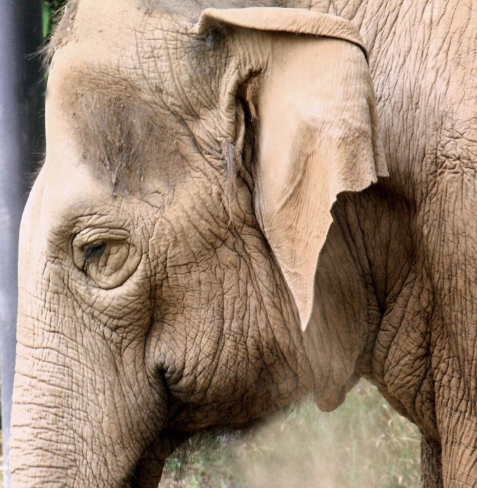 Elephant by Selina Tour