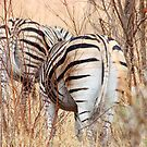 "BURCHILLS ZEBRA  ""SETS OF TWO"" by Magaret Meintjes"