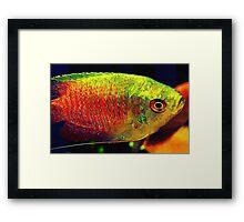 Piercing Eye  Framed Print