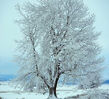 Cold Winter Tree by kinnikurose