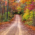 Autumn Country Road by NatureGreeting Cards ccwri