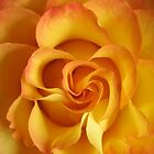 Burst of Orange  by Tracy DeVore