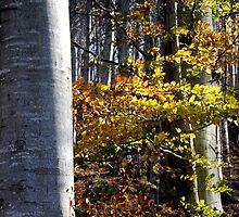 Fall colors in a Melogno Forrest, Italy by Monica Di Carlo