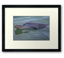 Dolphin. Framed Print