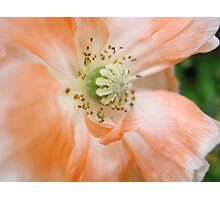 Waving Poppy Photographic Print