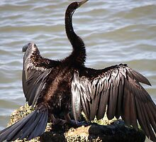Still spreading his wings by georgieboy98