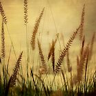 Golden Grass by Jackie Cooper