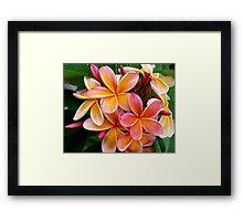 Plumeria....Penang Peach Framed Print