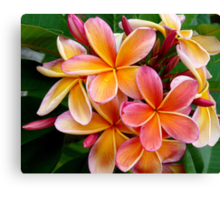 Plumeria....Penang Peach Canvas Print