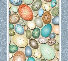 Colorful Bird Eggs by Kathleen Dupree