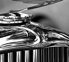 Duesenbird by James Howe