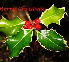 Holly Christmas Card by jacqi