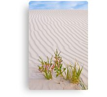Sand Dune - Western Australia Canvas Print