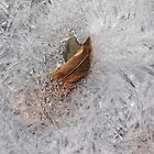 Leaf in Ice Crystals by Jim Legge