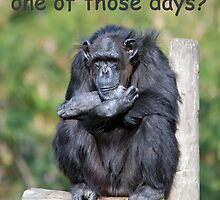 Have you ever had one of those days? by Lisa Jones Caldwell