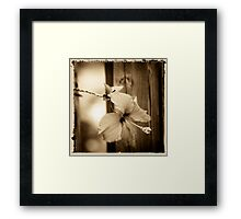 hibiscus in brown Framed Print