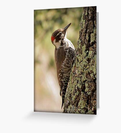 Arizona Woodpecker, Madera Canyon Greeting Card