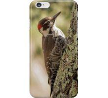 Arizona Woodpecker, Madera Canyon iPhone Case/Skin