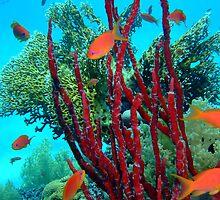 Red Sponge by lilithlita
