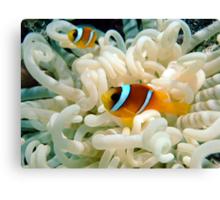 Anemone Fish Canvas Print