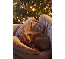 Not a Creature was Stirring... Photographic Print