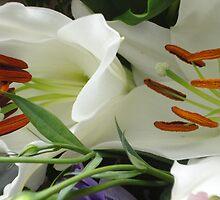 White Lillies by Julie  Hamilton