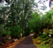 My Path by Evita