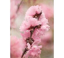 Spring arrives softly Photographic Print