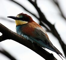 Bird by Roddy Atkinson