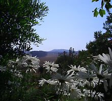 Daisies of my yard by BaZZuKa