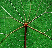 Radiant Leaves II by Nicholas Ward