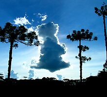 Araucaria Trees, Aparados da Serra National Park, Brazil  by Nicholas Ward