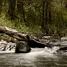 Tuponga River by Alex Evans