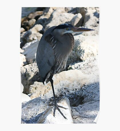 The Great Blue Heron (Self Reliant) Poster