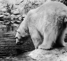 I Heart Debby the Polar Bear by Marny Barnes