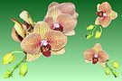 Orchids on Green by Margaret Stevens