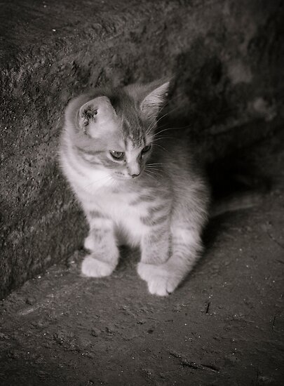 Barn Kitten by cforsythe