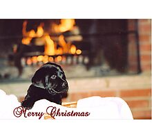 Puppy Love Christmas Photographic Print
