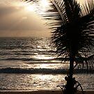 Sun Palm 2008 by sunism
